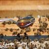 Fairmont Empress Bees