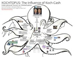 Kochtopus - the influence of Koch-Cash
