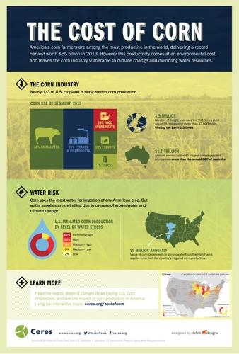 Corn Infographic