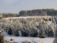 Coleman's Christmas Tree Farm