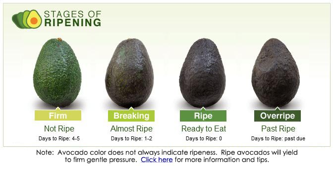 picking a ripe avocado copy