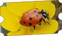 Bug & Bud Festival