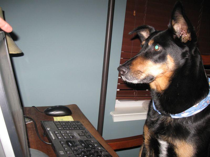 Cheyenne on the PC