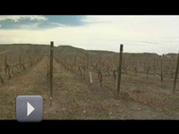 7news_Colorado-Wine-Industry_nli_200x150