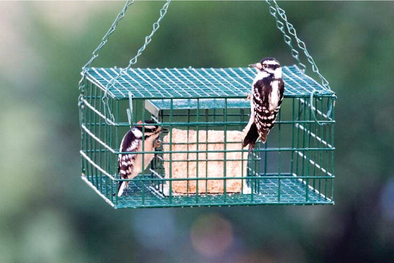 suet feeder starling proof