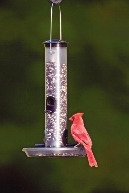 tube with tray cardinal