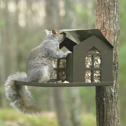 squirrel lunch box