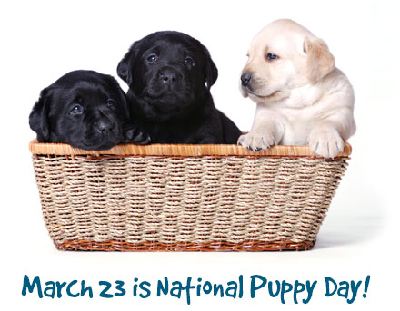 March 23 is National Puppy Day!