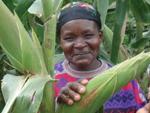 Shedding Light on Land Tenure in Africa