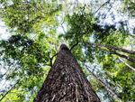 New High-Resolution Forest Maps Reveal World Loses 50 Soccer Fields of Trees Per Minute