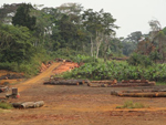 Equatorial Guinea Increases Protected Forests by 63 Percent, Shows New Atlas
